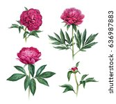 watercolor illustration of... | Shutterstock . vector #636987883