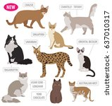 cat breeds icon set flat style... | Shutterstock .eps vector #637010317