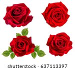 rose isolated on the white... | Shutterstock . vector #637113397