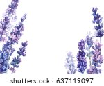 flowers lavender  watercolor ... | Shutterstock . vector #637119097