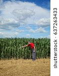 Small photo of Farmer or agronomist examining corn plant field using tablet