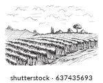 Rows Of Vineyard Grape Plants...