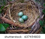 Blue Eggs In A Nest Of A...