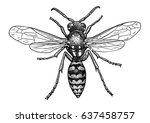 wasp illustration  engraving ...   Shutterstock .eps vector #637458757