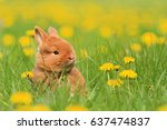 sweet red rabbit among yellow... | Shutterstock . vector #637474837