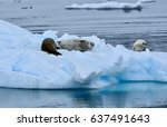 Small photo of Seals lounging on ice in the Errera Channel, Antarctica