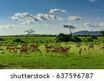 africa tanzania national... | Shutterstock . vector #637596787