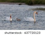 swans on the lake | Shutterstock . vector #637720123
