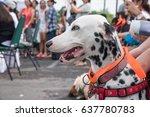 Dalmatian dog sitting with people.