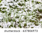 snow is fallen on grass in... | Shutterstock . vector #637806973