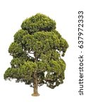 pine tree isolated on white... | Shutterstock . vector #637972333