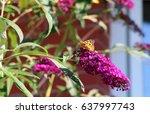 Lady Butterfly On Butterfly...