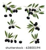 black olive branch. photo... | Shutterstock .eps vector #63800194