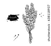 lavender vector drawing set.... | Shutterstock .eps vector #638118937