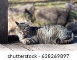 Tabby Cat Sleeping On A  Wood...
