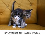 Stock photo striped kittens 638349313