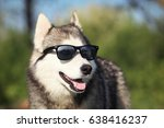 Dog With Glasses. Sunglasses...