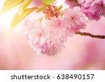 fresh pink flowers of sakura... | Shutterstock . vector #638490157