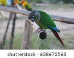 Small photo of Green-cheeked parrot stay on the wood