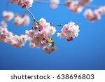 pink sakura cherry blossom.... | Shutterstock . vector #638696803