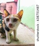 cat closeup  | Shutterstock . vector #638751487