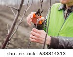 Agronomist Pruning Of Fruit...