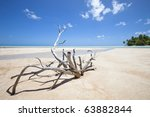 Deadwood On White Sand Beach...