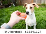 young dog playing with orange...   Shutterstock . vector #638841127