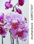 pink phalaenopsis orchid   Shutterstock . vector #638927347