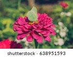 butterfly on flower | Shutterstock . vector #638951593