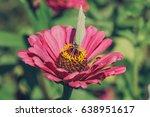 butterfly on flower | Shutterstock . vector #638951617
