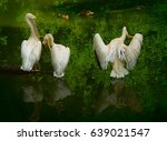 Three Pelicans Dry Their...