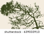 the pine branches with the cones | Shutterstock .eps vector #639033913
