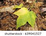 Chaya Leaf Over Fertilizer...