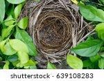 Yellow Vented Bulbul Bird's Nest