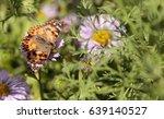 West Coast Lady Butterfly ...