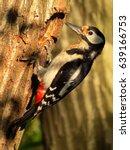 great spotted woodpecker ... | Shutterstock . vector #639166753