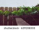 Ivy Gourd Plant Climbing Up A...