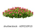 Stock photo flower bush tree isolated tropical plant with clipping path 639210913