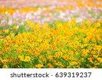 cosmos flowers in the garden | Shutterstock . vector #639319237