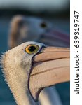 close up of a pelican's head in ... | Shutterstock . vector #639319747