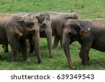 a group of elephants are eating ... | Shutterstock . vector #639349543