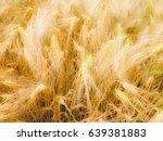 a barley corn field in germany... | Shutterstock . vector #639381883