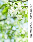 background from branches of... | Shutterstock . vector #639553897