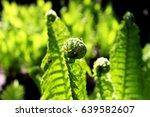 beautiful fern leaves in a