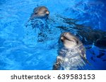 dolphin playin in the water... | Shutterstock . vector #639583153