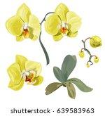 Set Phalaenopsis Orchid ...