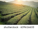 tea plantation in chiang rai ...   Shutterstock . vector #639616633