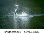barramundi jumps into the air... | Shutterstock . vector #639686833