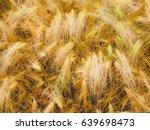 a barley corn field in germany... | Shutterstock . vector #639698473